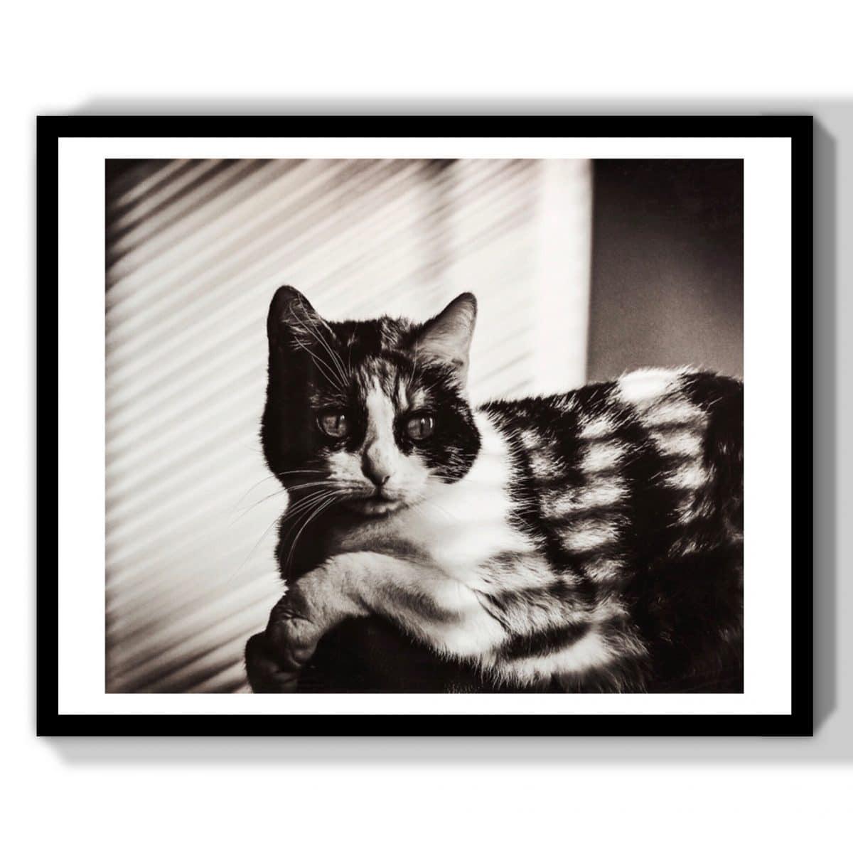 chat cinema classique vintage noir et blanc