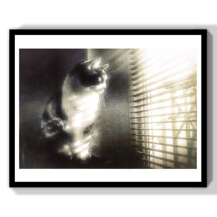 chat noir et blanc à la fenêtre cadeau