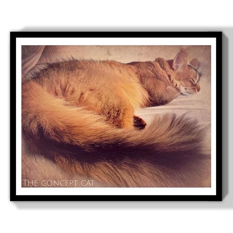 idée originale cadeau gros chat endormi