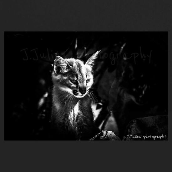 Cat Black and white art photographer