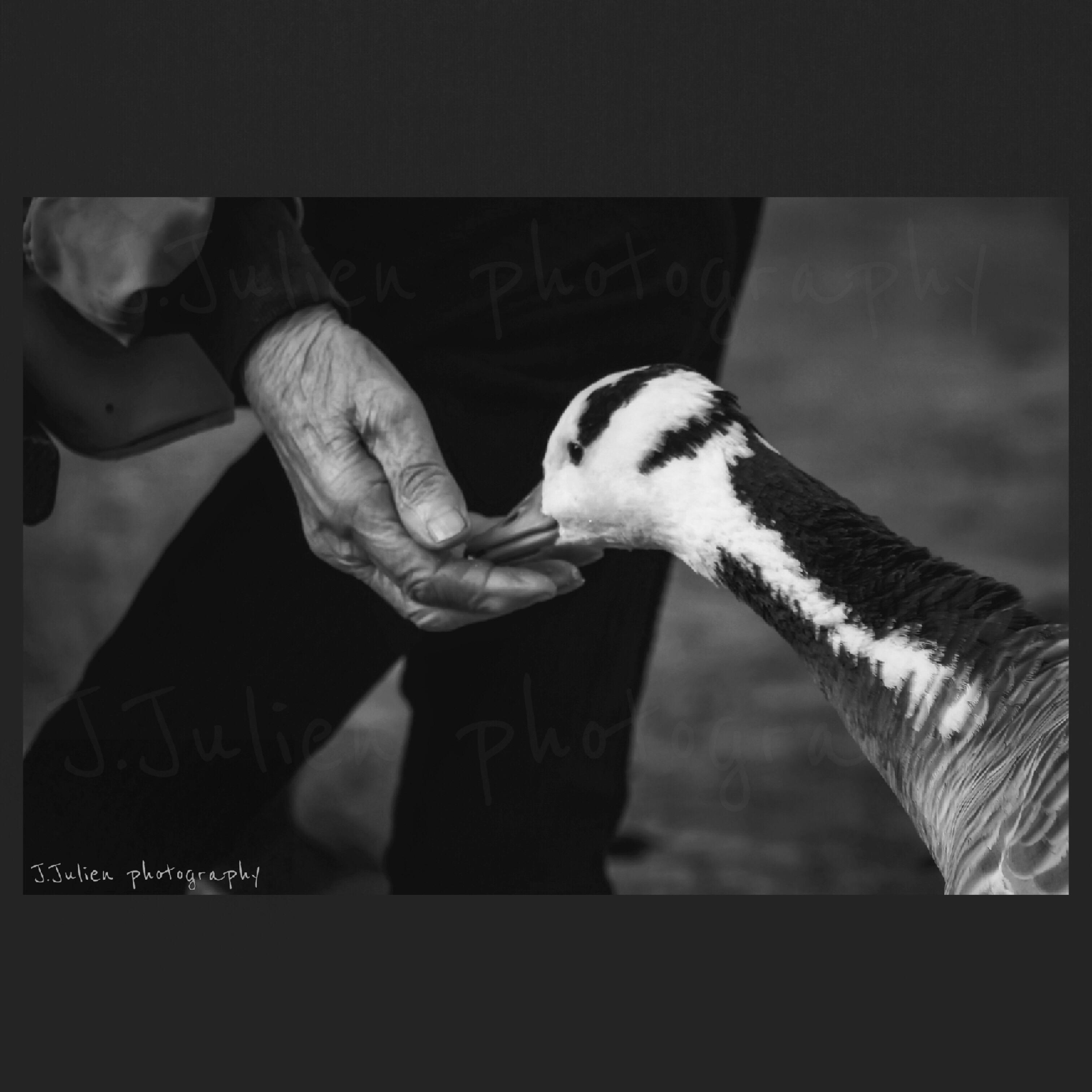 bird photography art Jacques Julien
