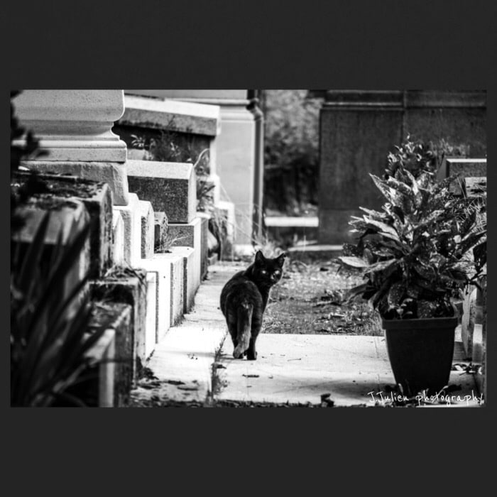Black cat photography cemetery