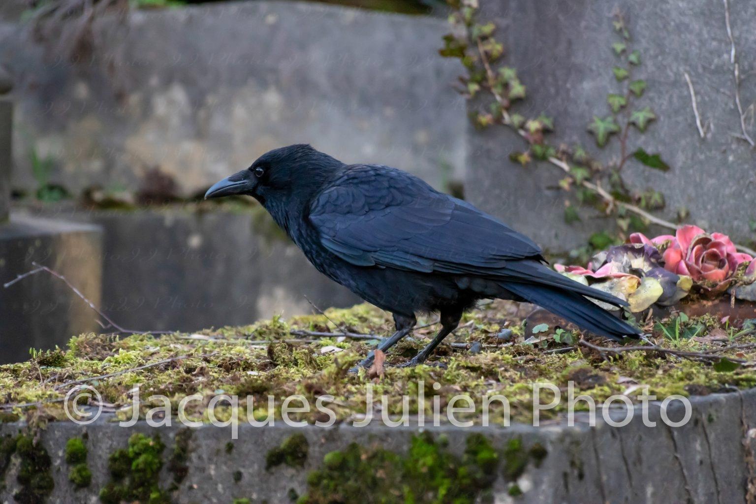 photographie gothique oiseau