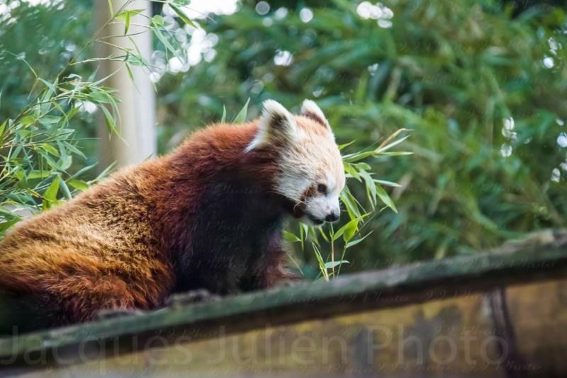 animal photographer photo