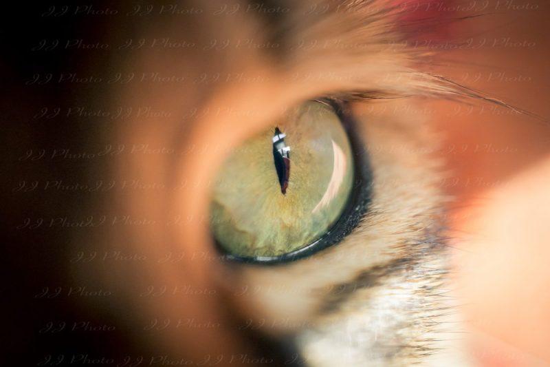 green eye art photography