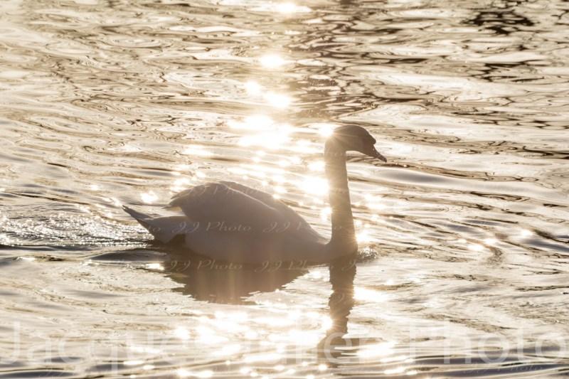 Bird Photography Free Royalty