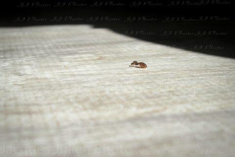 Ant (Lasius) on the floor – Stock Photo