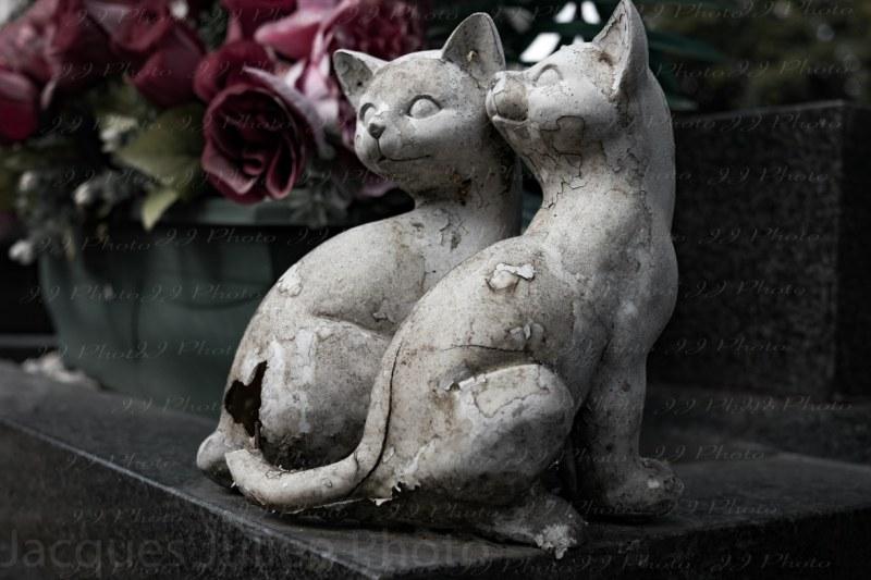 Photographie chats dans un cimetière