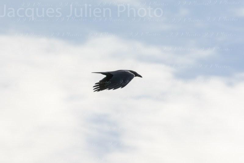 Raven Sky Photography