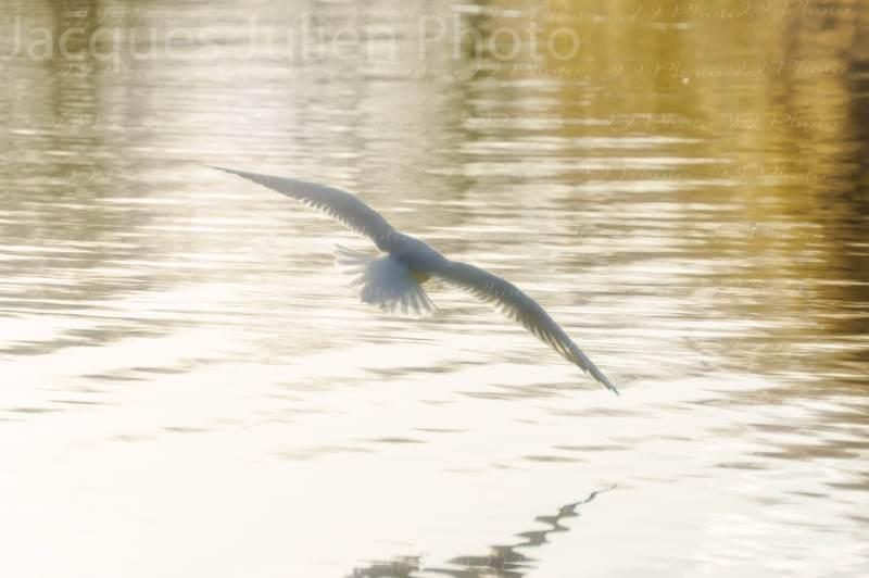 bird art photography