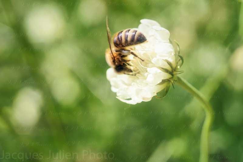 Macro photographie abeille art