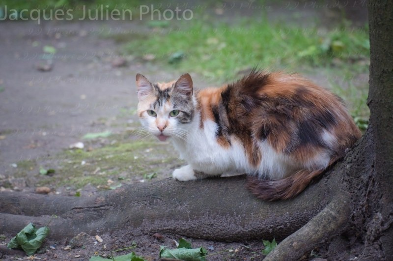 Stray cat nature photography