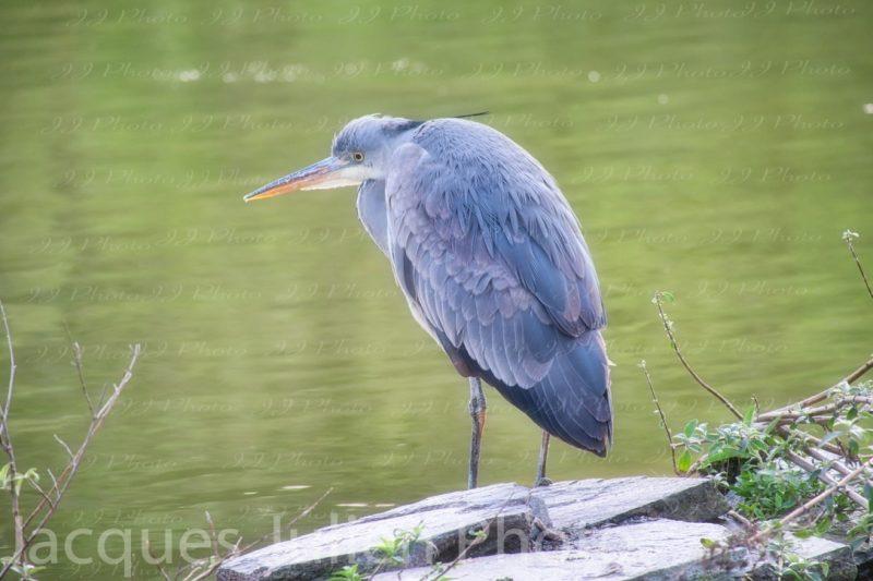 water bird art photography