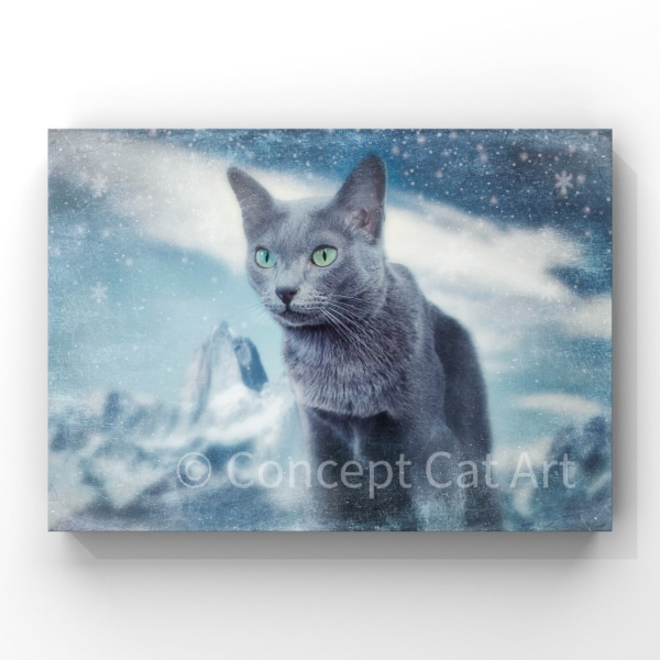 Blue cat in snow photography
