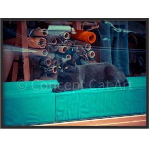 Photographie de chat noir chez un tailleur