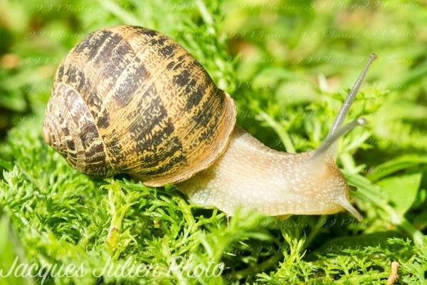 gastropod on grass