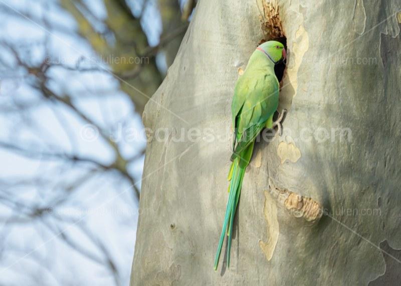 perroquet vert sur un arbre dans son nid