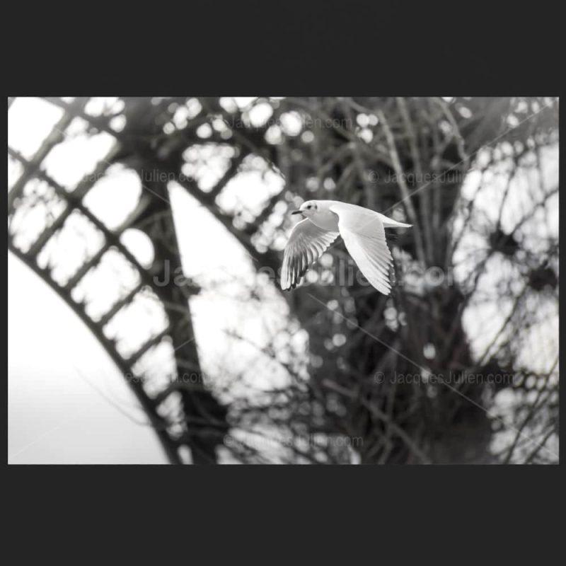 oiseau volant sous la tour Eiffel