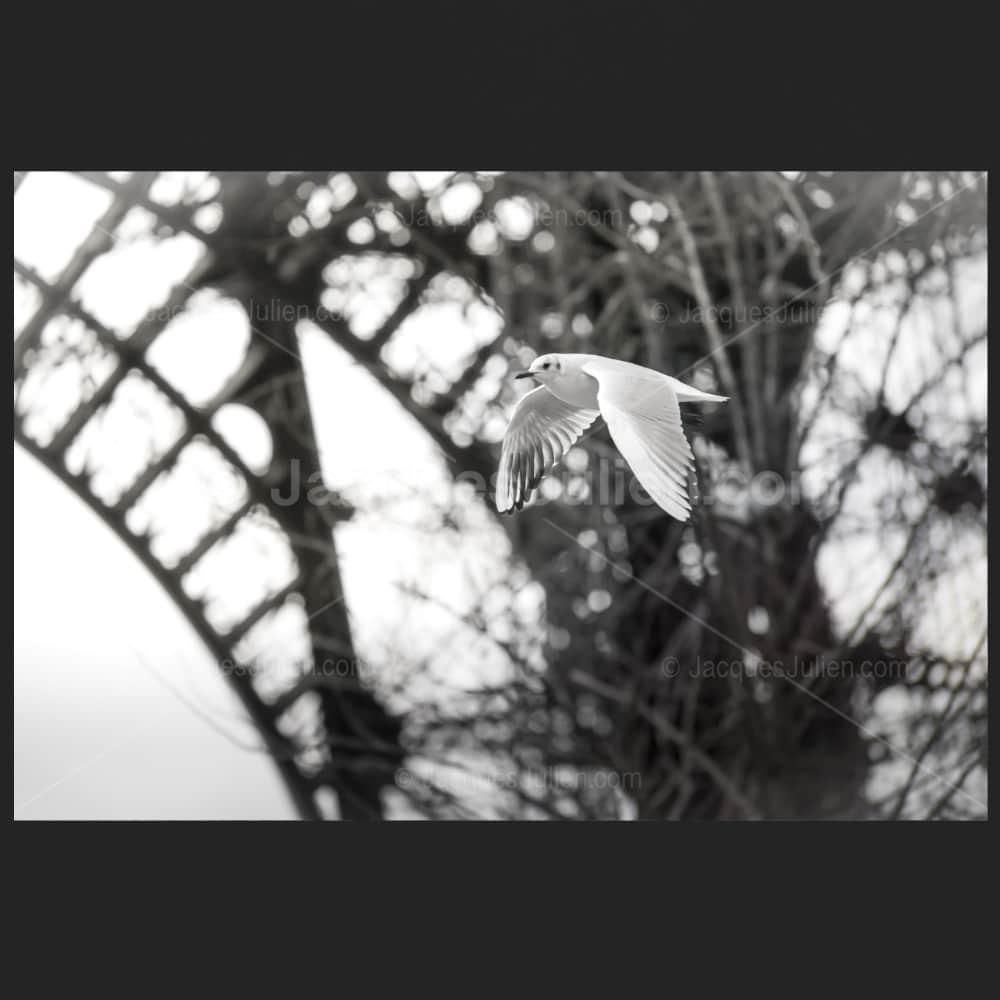 white bird flying under Eiffel tower