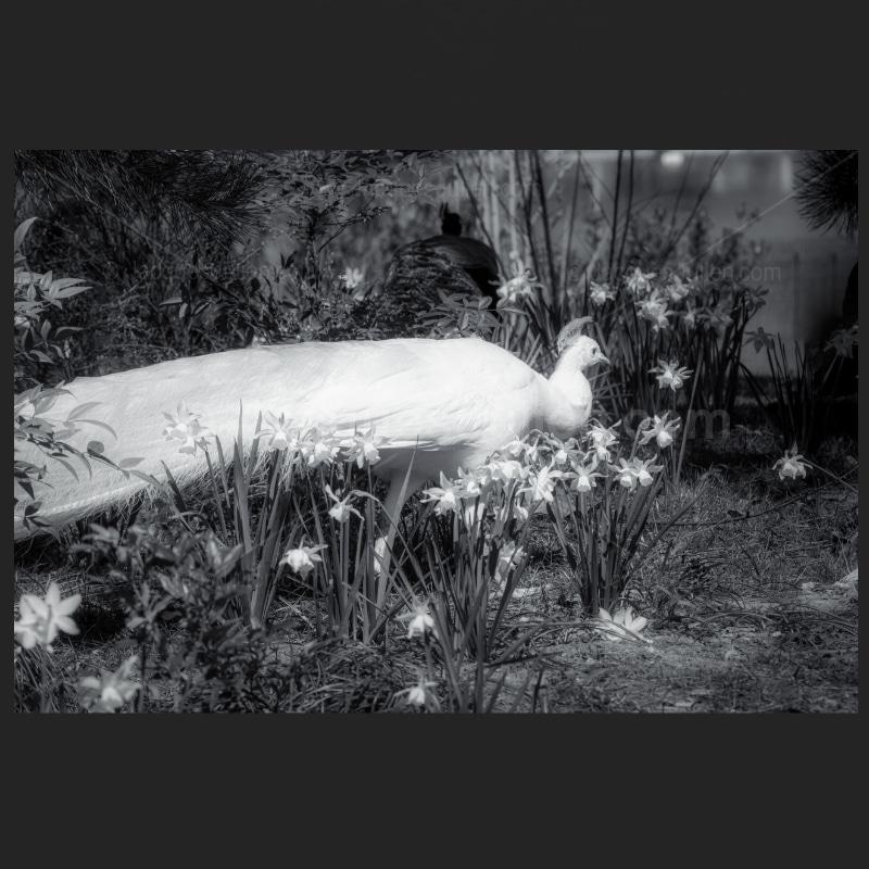 grand oiseau photographie monochrome