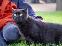 black cat photography Paris
