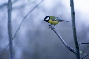 Read more about the article New bird pictures to download
