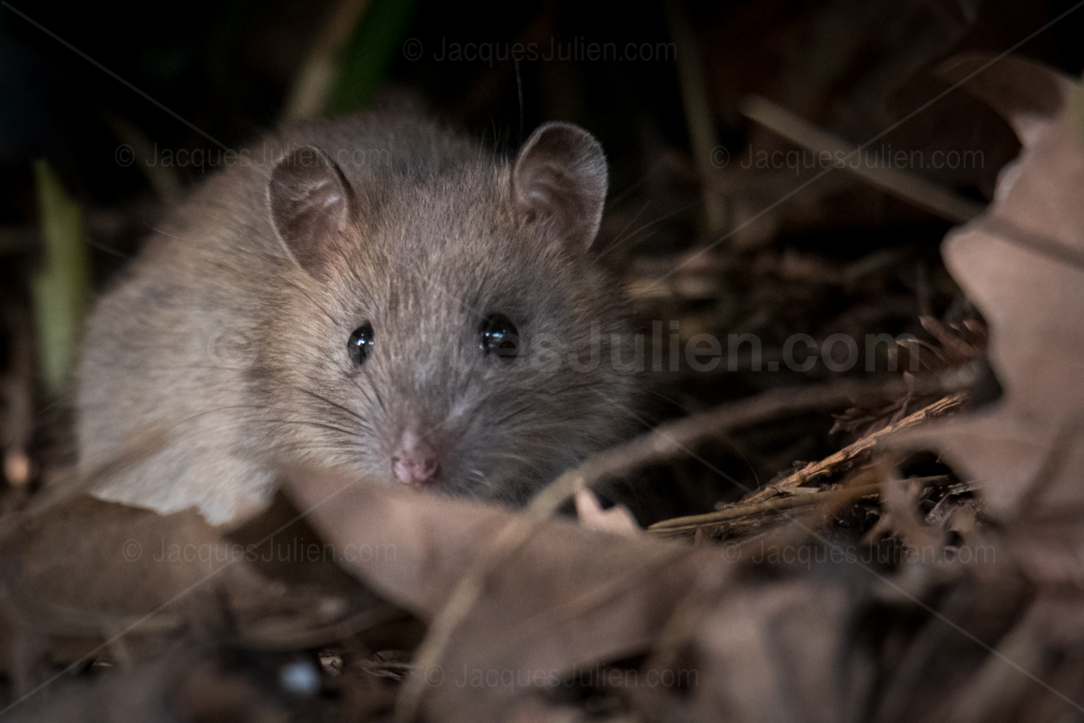 find mice photo